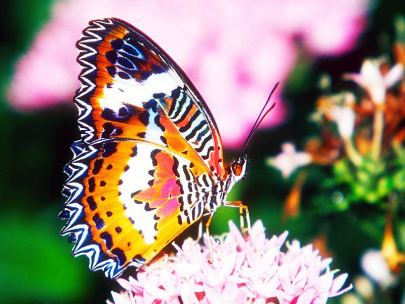 Kupu-kupu yang sedang menghisap nektar bunga