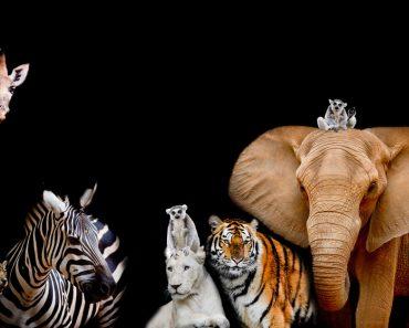 hewan dilindungi
