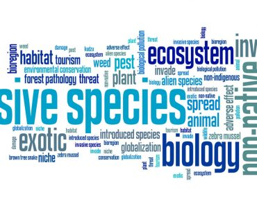 spesies invasif