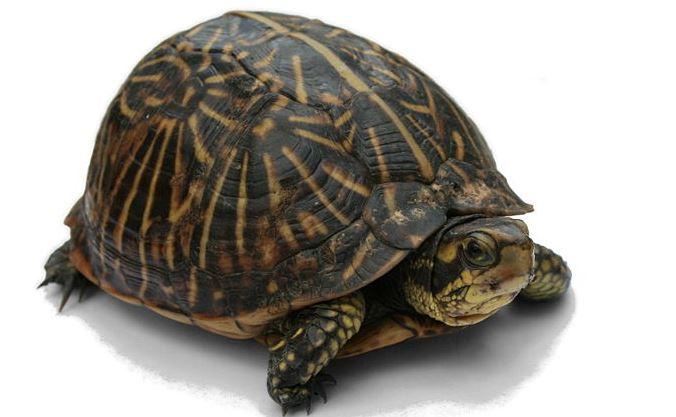 Reptil Hewan Vertebrata Berdarah Dingin Kitacerdas Com