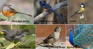 Jenis-Jenis Burung